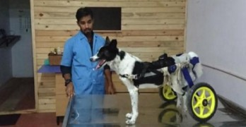Vet in India Designs Special Cart to Allow Injured Dog to Walk Once Again