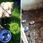 Dogs Living on Piles of Feces in a Basement Get a Breath of Fresh Air for the First Time in 7 Months
