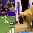 The Four Kinds of Dogs You'd See at an Obstacle Course Competition