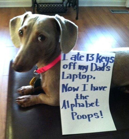 6.17.16 - Dog Shaming - Father's Day Edition12