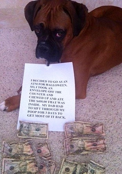 6.17.16 - Dog Shaming - Father's Day Edition13
