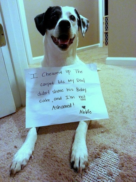 6.17.16 - Dog Shaming - Father's Day Edition15