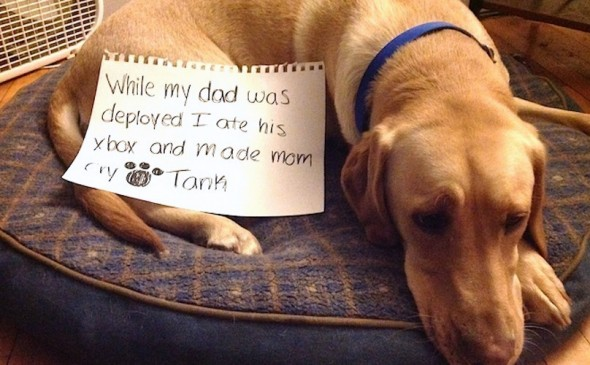 6.17.16 - Dog Shaming - Father's Day Edition17