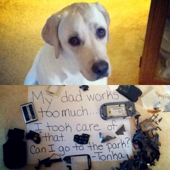 6.17.16 - Dog Shaming - Father's Day Edition2