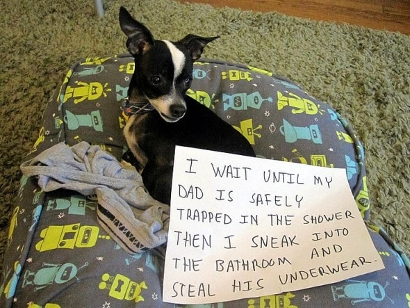 6.17.16 - Dog Shaming - Father's Day Edition20