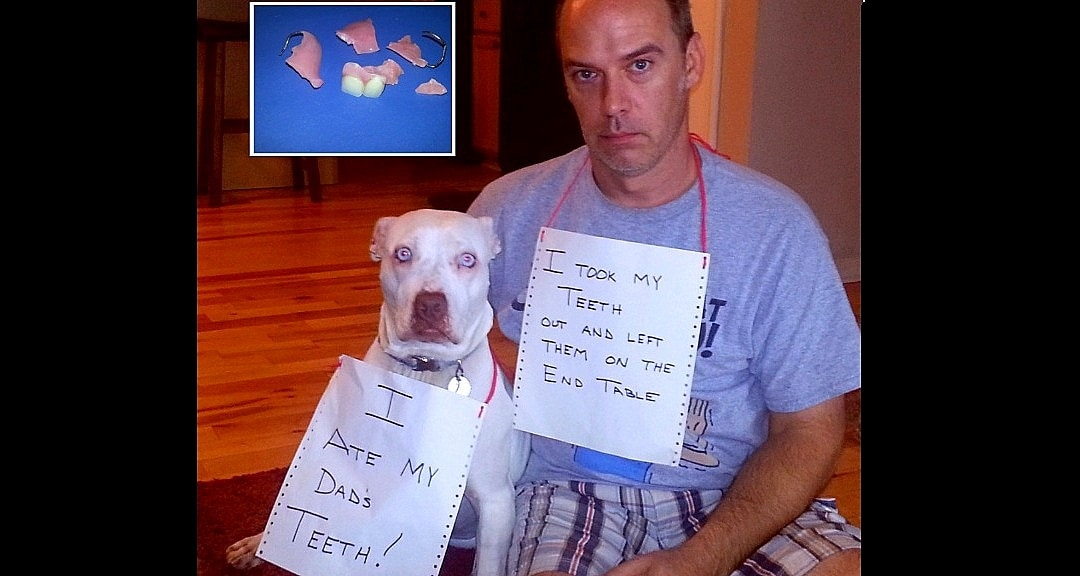 Dogs Who've Been Real Jerks to Their Dear Old Dads