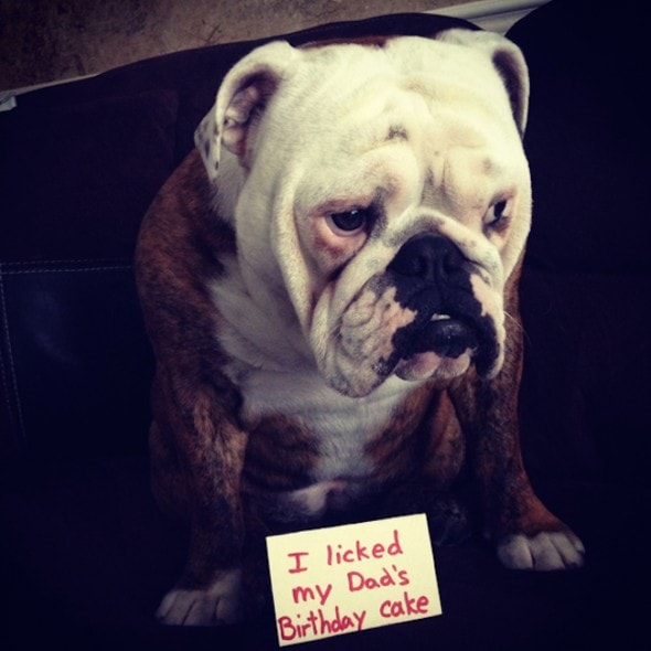 6.17.16 - Dog Shaming - Father's Day Edition5