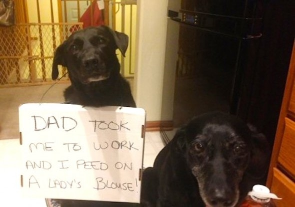 6.17.16 - Dog Shaming - Father's Day Edition6