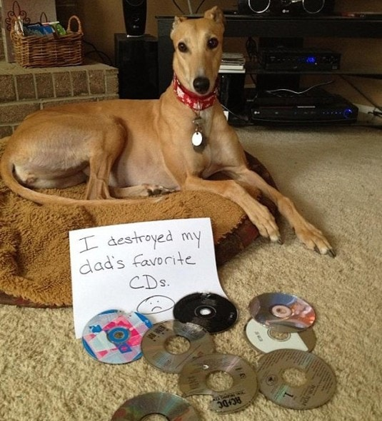 6.17.16 - Dog Shaming - Father's Day Edition7