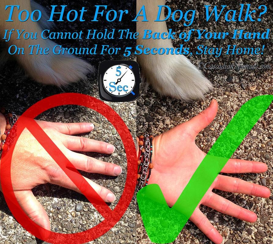 Walking Dogs On Hot Pavement