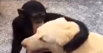 Chimp Waits With Dog for Human to Come Back