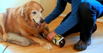 "Devoted Dog Dad Turns His Own Sneaker into a ""Faux Paw"" for His Amputee Dog"