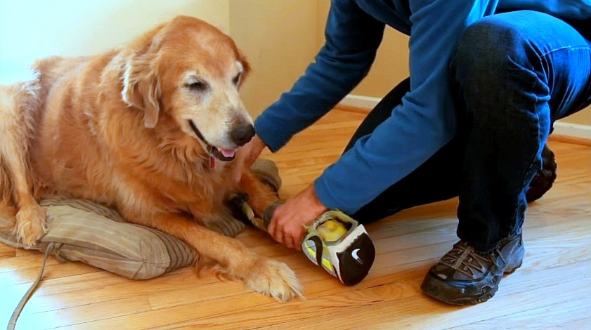 """Devoted Dog Dad Turns His Own Sneaker into a """"Faux Paw"""" for His Amputee Dog"""
