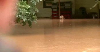 Rescue Volunteers Save Chained Dog Up to Her Neck in Flood Water