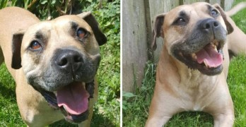 Sweet Bree Is an Easy Going Dog Looking for a Forever Home