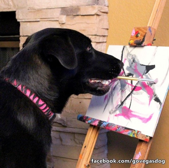 6.22.16 - Rescue Dog Now Raises Money for Other Shelter Dogs with Her Paintings3