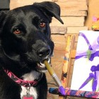 Rescue Dog Now Raises Money for Other Shelter Dogs with Her Paintings