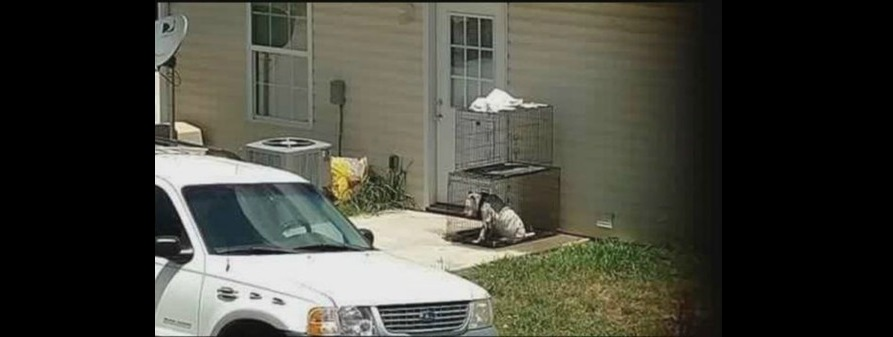 Rescue Group Confronts Woman at Her Home Over Leaving Dog Outside All the Time