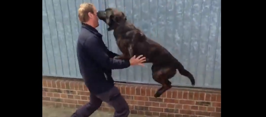 """Police Dog """"Pounces"""" Trainer After Being Apart for a few Days"""
