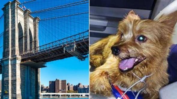 6.24.16 - Brooklyn BridgeFEAT