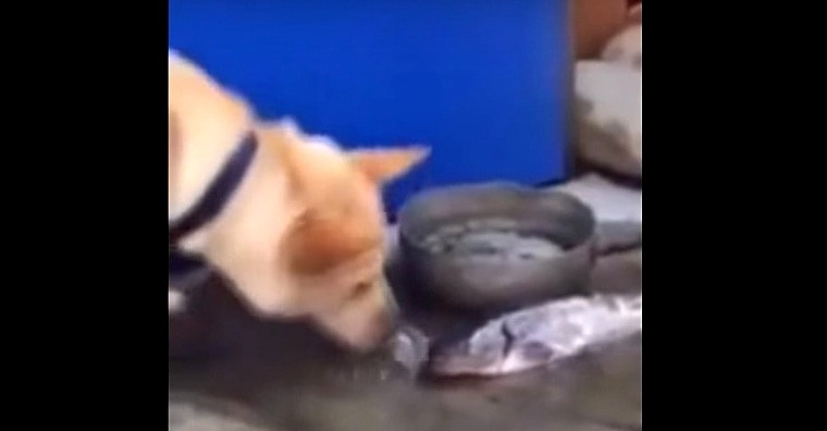 Compassionate Dog Tries to Save Dead Fish by Giving Them Water