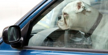 Florida Passes Law Allowing People to Break Into Cars to Rescue Dogs and People