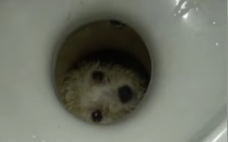 Tiny Dog Trapped in Toilet Rescued by Firefighters