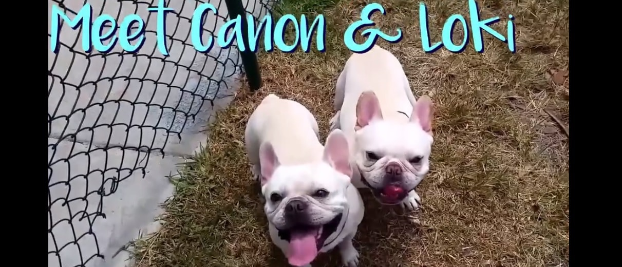 Canon and Loki LOVE to Play With Balloons in the Dog Park