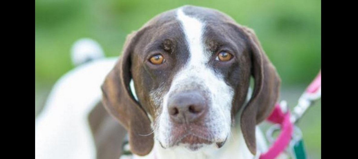 LWD Presents: Filippo, Our Adoptable Dog of the Day!