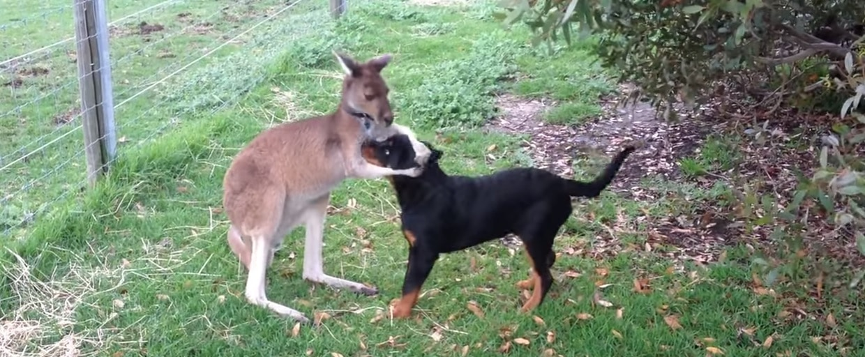 Blue the Roo and Trooper are Best Friends Forever
