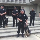 Woman Donates $22K for Bulletproof Vests for Philadelphia K9s
