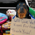 Rescue Bank – Celebrating 10 Years with Goal to Donate One Million Meals!