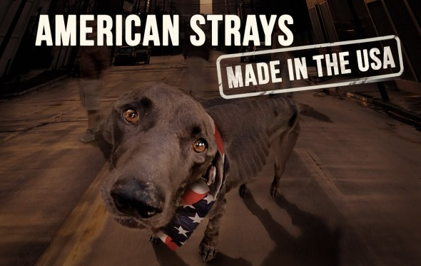 american strays 1