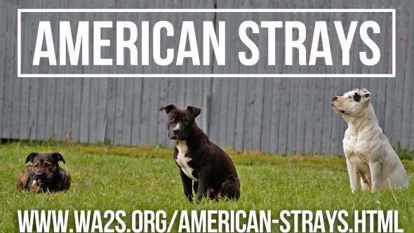american strays 2