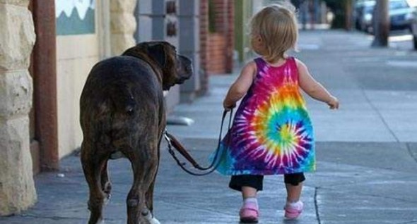 babies walking dogs