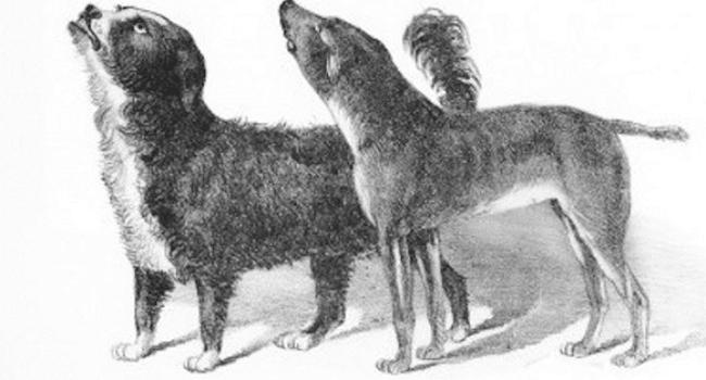 Lazarus & Bummer: San Francisco Celebrities Circa 1860(ish)