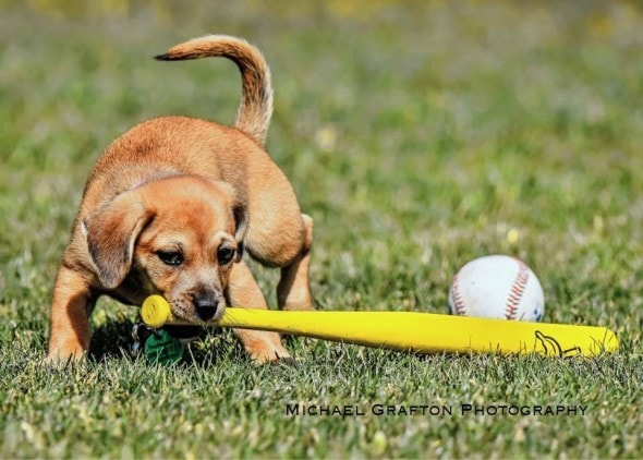 daisy-puppy-with-baseball_jpg_838x0_q80 2