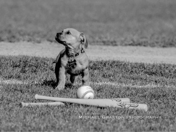 daisy-puppy-with-baseball_jpg_838x0_q80 3