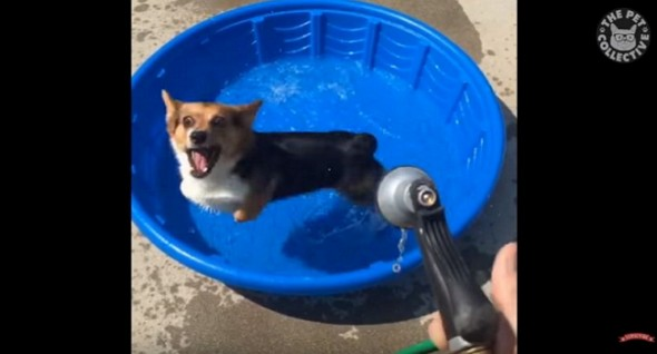 dogs vs water