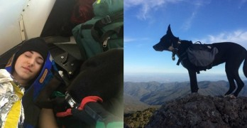 Bonnie, Heroics Save Her Owner After Fall From Cliff