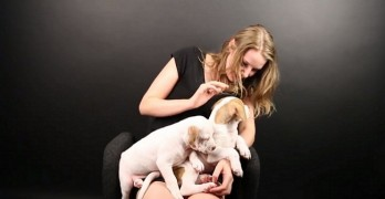 Pit Bull Puppies Meet People Who Don't Like Dogs