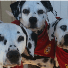 Fire Safety Reminder Time as Dog Jumps Three Flights to Firefighters
