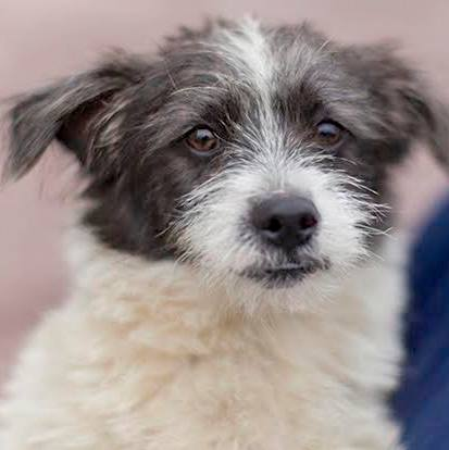 Cuddly Bugs is a 6-month-old ShihTzu-terrier mix.  ----------------------------------