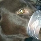 Update: Woman Found Guilty in Dog's Mouth Duct-Taping