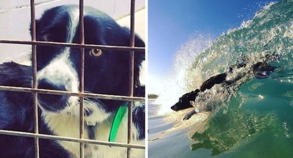 Mia went from shelter dog to beach dog! ---------------------------------------