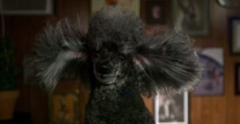 Conair Canines: Slo-Mo Grooming Vids Are An Instagram Sensation