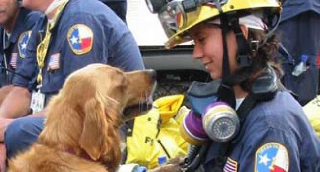 A Final Salute: Last Known 9/11 Search Dog is Euthanized
