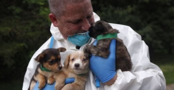 Extreme Hoarding: Over 270 Dogs Discovered in New Jersey Home