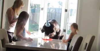 "That's One Big Birthday Boy: Sweet ""Newfy"" Sebastian Turns 7"