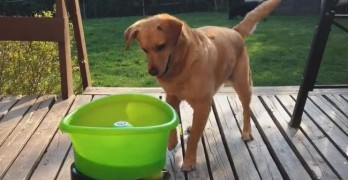Happy Dance: Rescue Dog Goes Bonkers Over Self-Fetch Toy